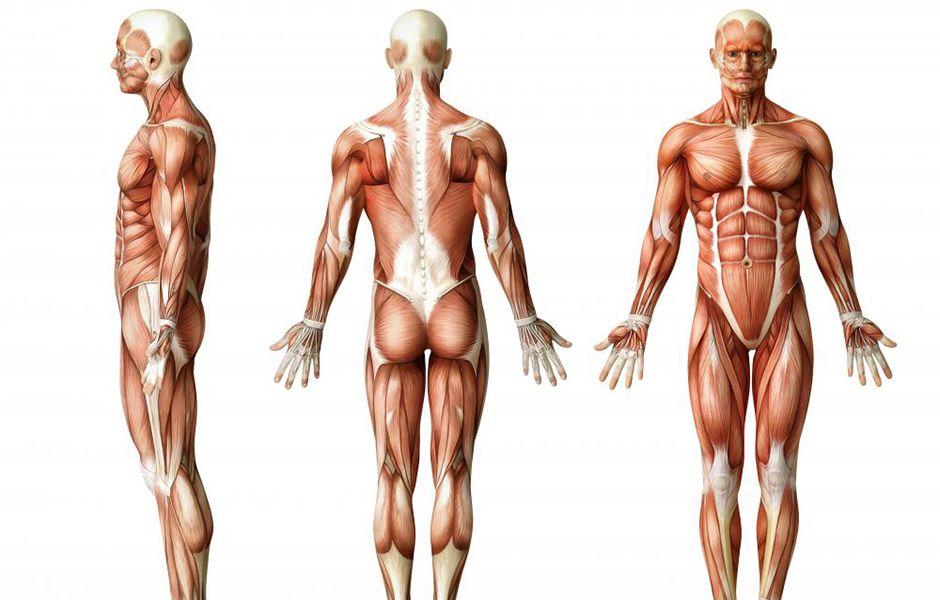 common mistakes in bodybuilding 464675676547 - اشتباهات رایج در بدنسازی کداماند؟