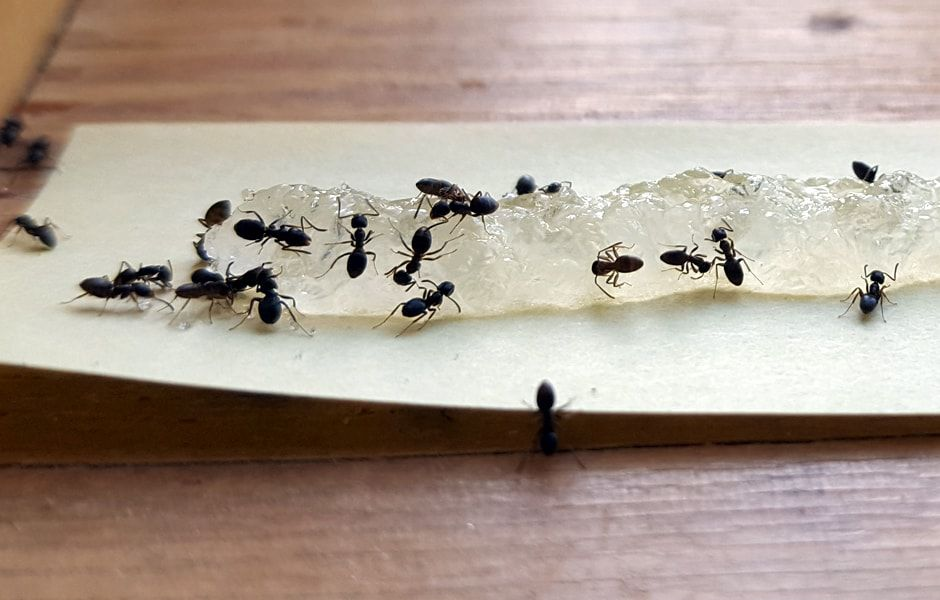 how to get rid of ants 234324324 - چگونه از دست مورچه ها خلاص شویم؟