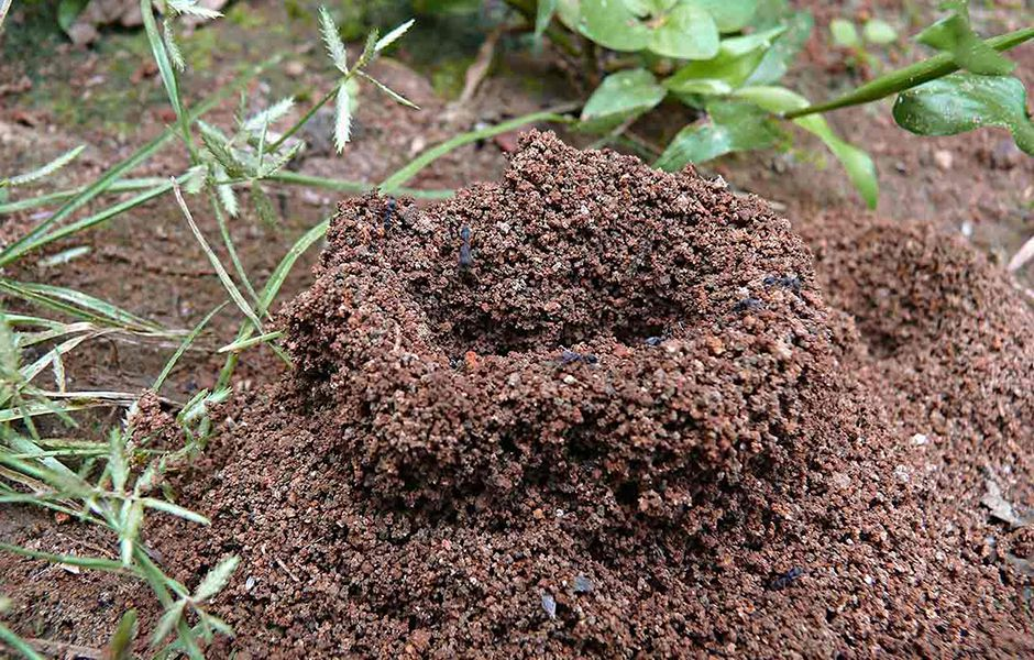 how to get rid of ants 4365464 - چگونه از دست مورچه ها خلاص شویم؟
