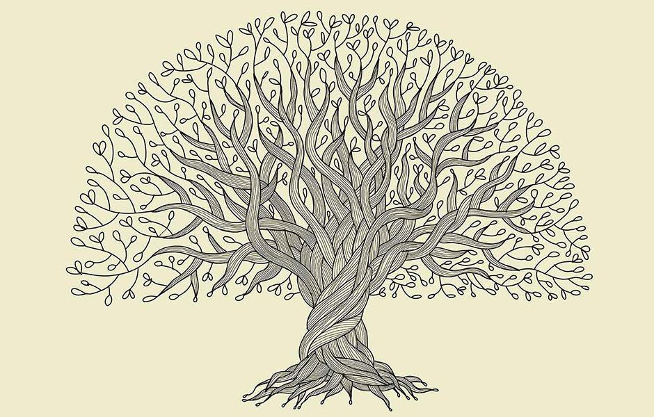 تصویر از چگونه درخت شجره نامه خانوادگی بکشیم؟